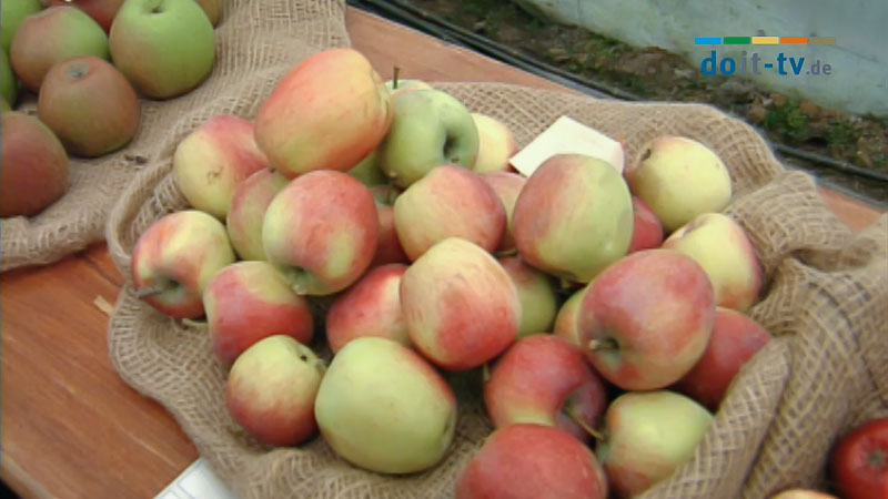 Alte Apfelsorten Bestimmen
