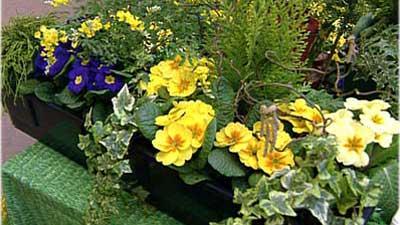 Säen und Pflanzen