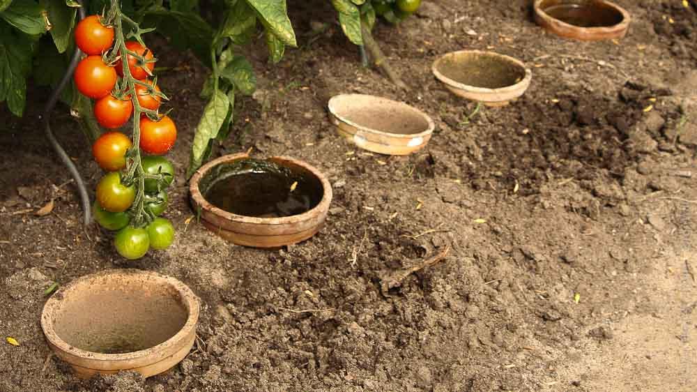 Tomaten Im Frühjahr Pflanzen Tipps