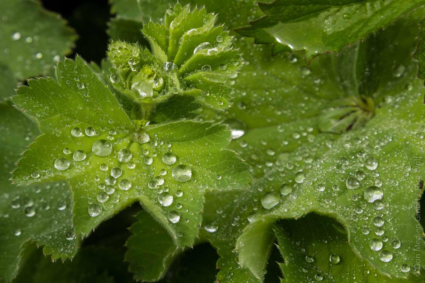 Regenwasser In Tonne Oder Zisterne Nutzen